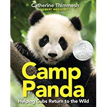 Camp Panda Helping Cubs Return to the Wild Sibert Honor Informational Book for Kids nonfiction.jpg
