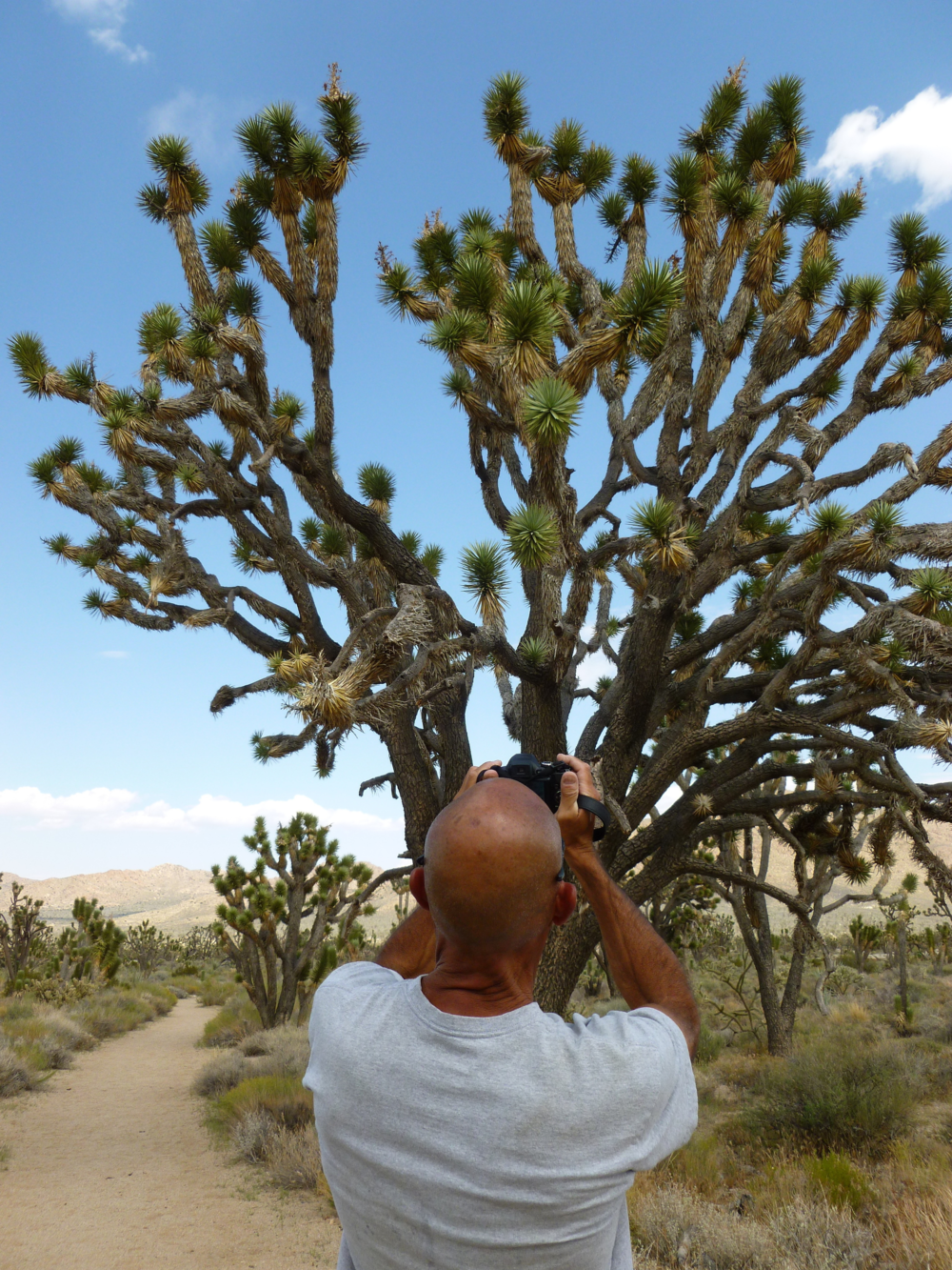 A visitor captures memories along the Teutonia Peak Trail in the Preserve. The trail crosses dense Joshua tree woodland and gently climbs a granite outcrop for magnificent views of the Mojave.