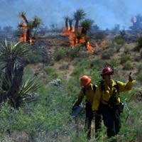 Firefighters tackle the Hackberry Fire of 2005.