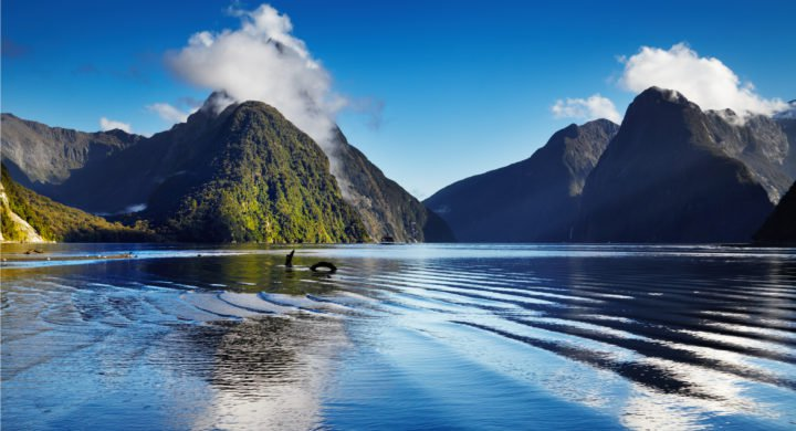 Undercurrent News, 7 Dec 2018 # NZ's Sustainable Seas project receives NZD 71m over 10 years