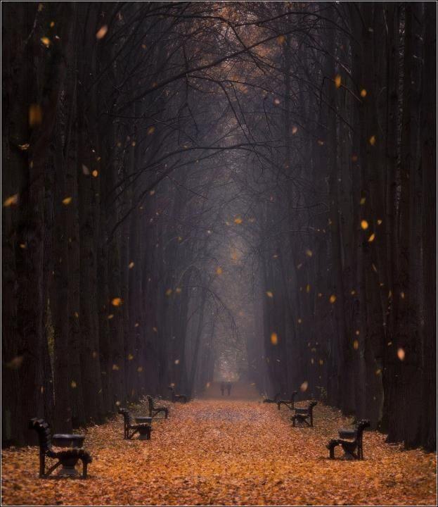 dark-autumn.jpg