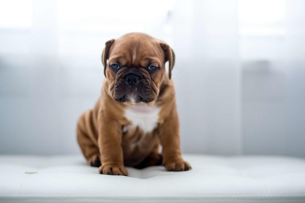 rochester- ny-family-pet-dog-puppy-photography03.jpg