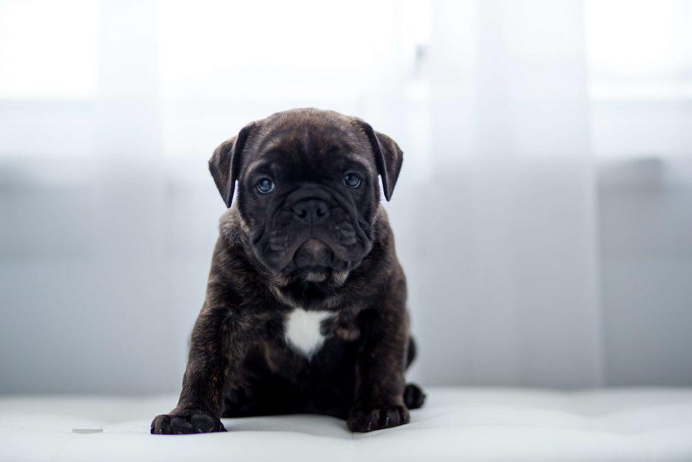 rochester- ny-family-pet-dog-puppy-photography04.jpg
