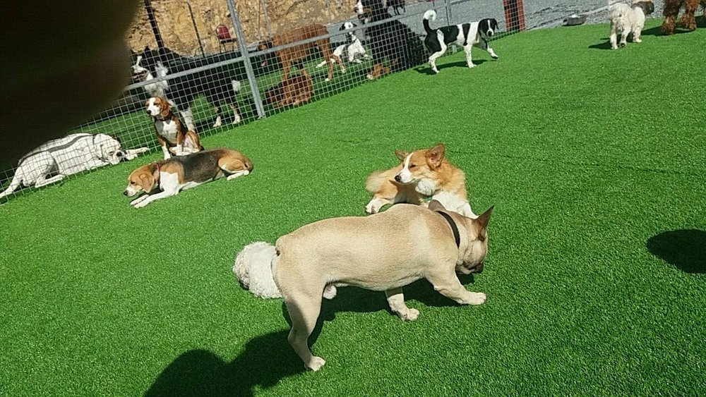 Our local residents enjoying fun in the sun at day care. -