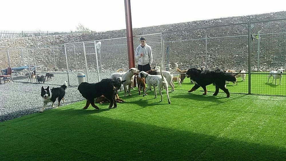 Dog Day Care Letterkenny