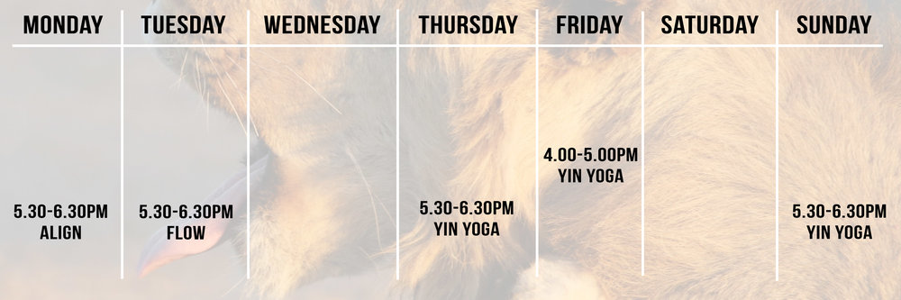 two feet yoga merewether yoga newcastle beginners yoga yin yoga