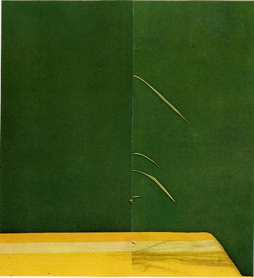 Shadowplay / Vert et jaune