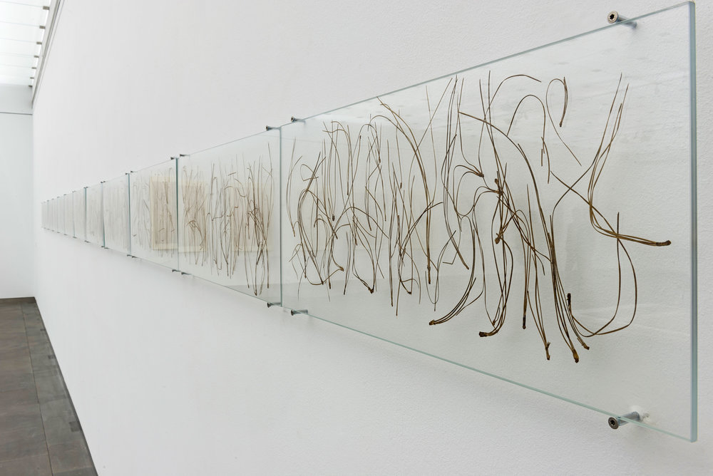 "Calligraphy, 2016.. Pine needles inserted in glass. 30cm x 840cm(11""x 1 ft)."