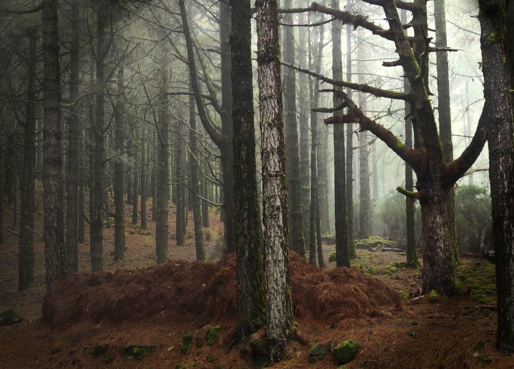 Woods. Digita print, 70x100cm, 2016.