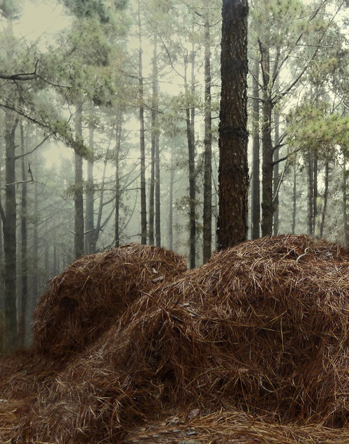 Man lying on the woods. Digital print, 2016. 70cm x100cm
