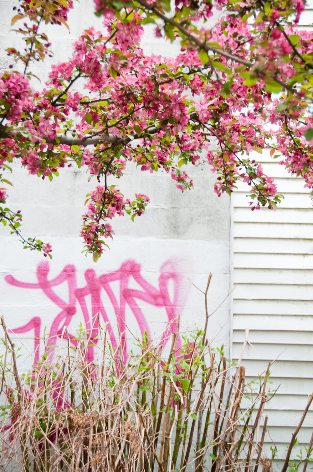 graffiti_7552749220_o.jpg