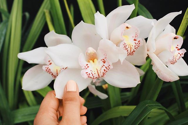 Orchids are a MUST-have today. Not only is it #NationalOrchidDay, but who wouldn't want to celebrate #Easter without these beauties in their baskets? We sure wouldn't want to miss out! Happy Easter everyBUNNY! 🐰🐣💐