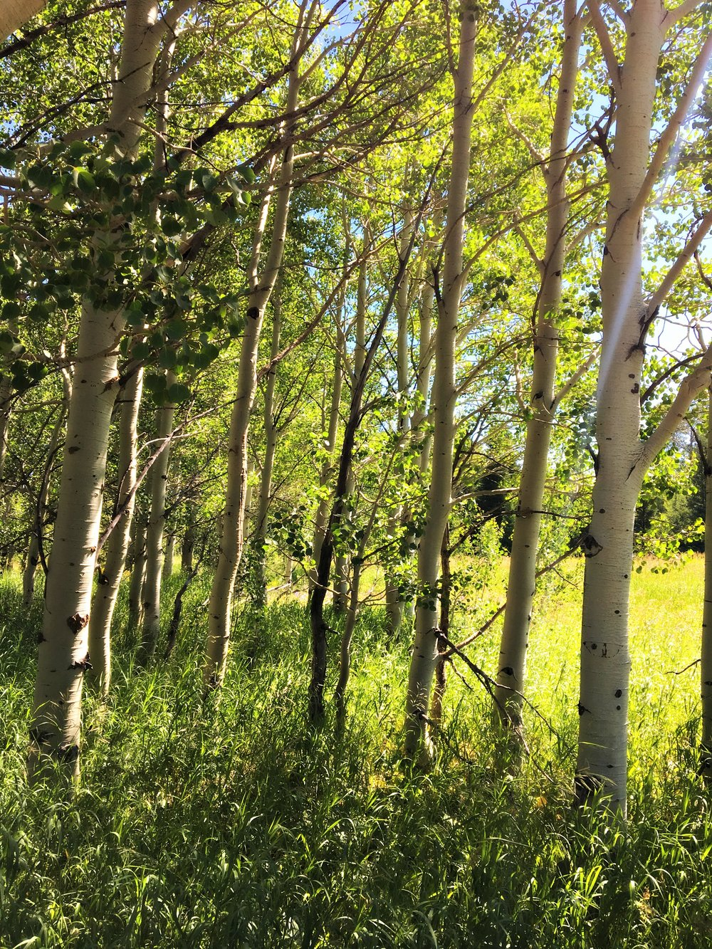 aspen grove west yellowstone