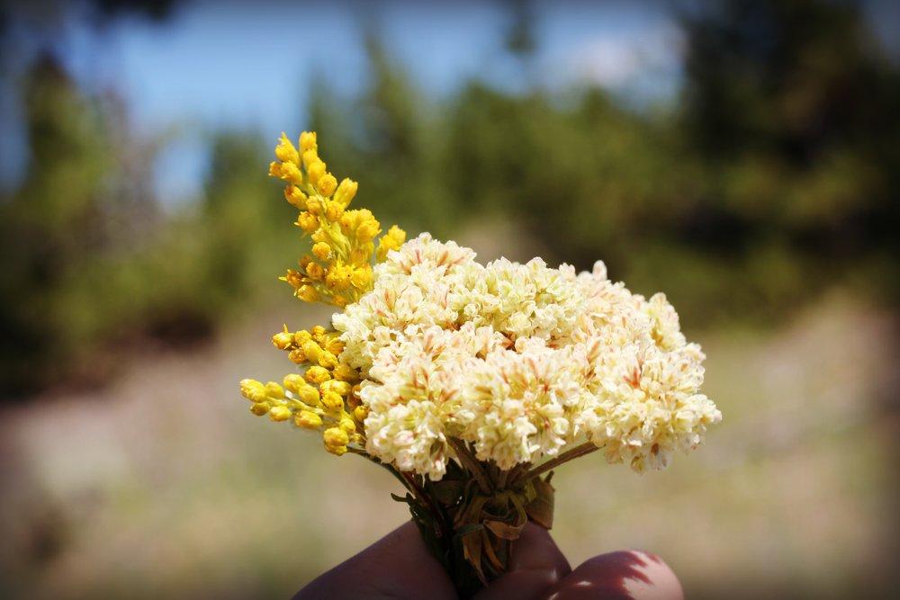 flowers-yellowstone