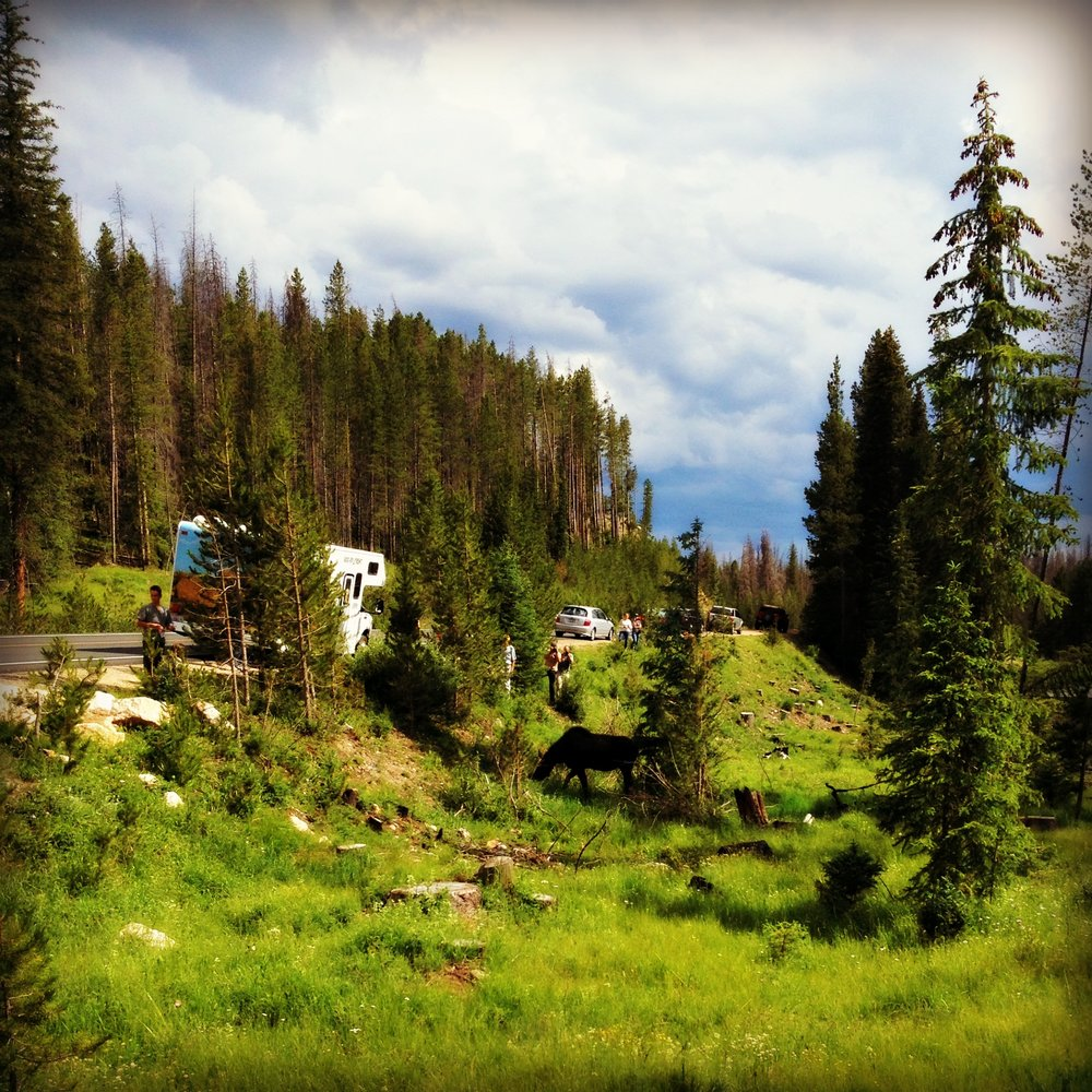 rocky-mountain-national-park-wildlife