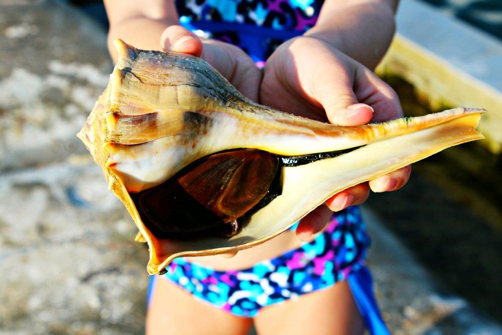 live-conch-st-joseph-peninsula-state-park-florida