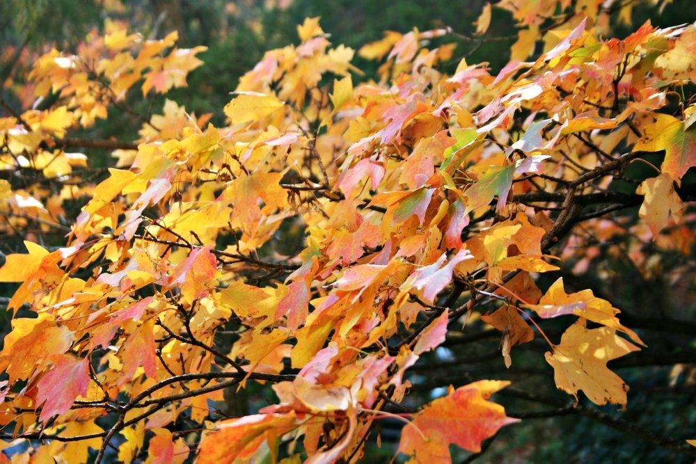 fall-leaves-ozarks