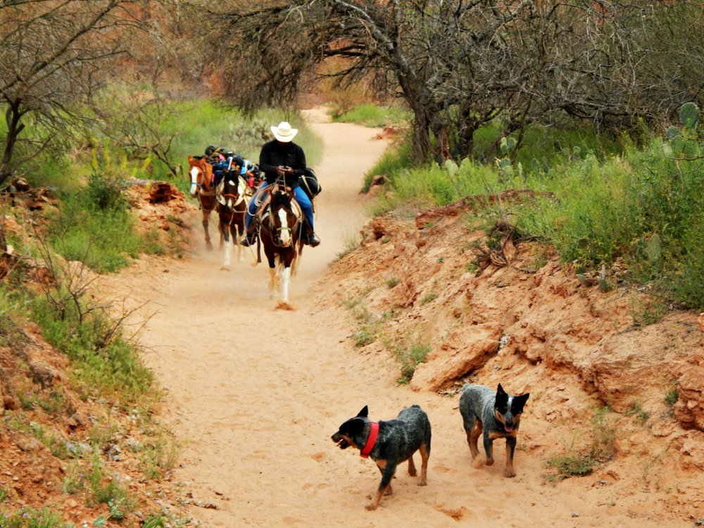 mules-carry-camping-gear-havasupai-hiking-trail