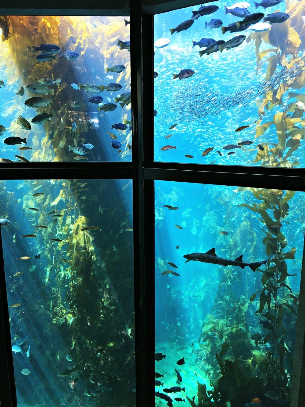 monterey-california-aquarium