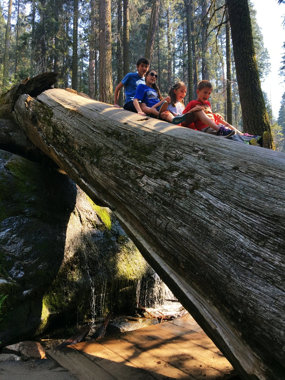 four kids sliding down giant sequoia national park