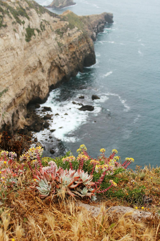 flowers-channel-islands-coast