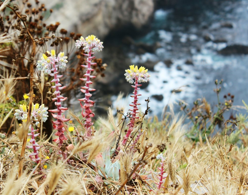 Explore Channel Islands National Park.  Hop on the Island Packers boat and spend the day or spend the night! Hiking, kayaking, snorkeling, scuba, plus flora and fauna only found on this island!
