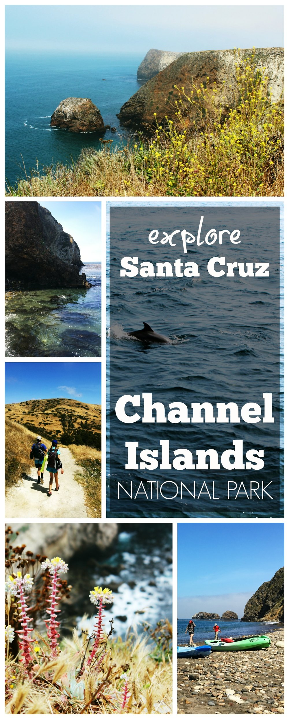 Channel Islands PIN Santa Cruz.jpg