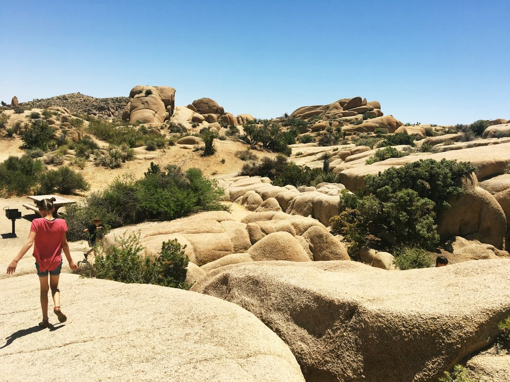 Day trip to Joshua Tree National Park. Drive through Joshua Tree, climb jumbo rocks, play in Hidden Valley, and star-gaze at the local observatory with your family in this gorgeous desert park.