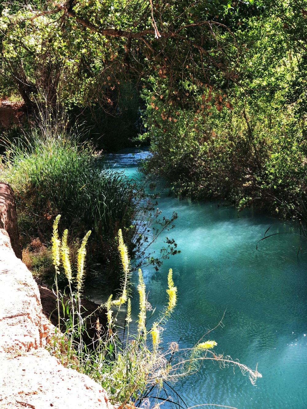 havasu-creek-first-glance
