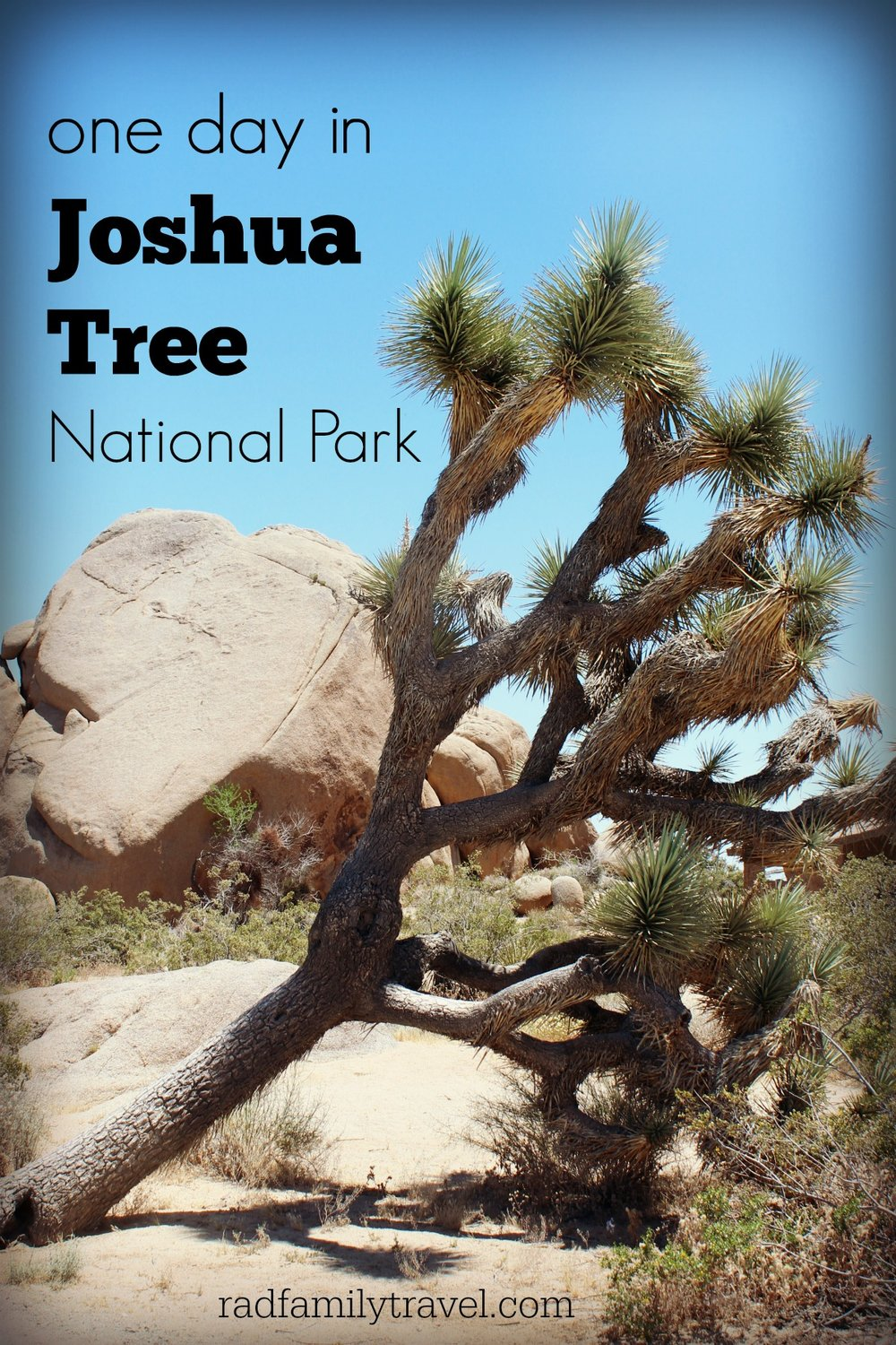 Joshua Tree National Park in one day