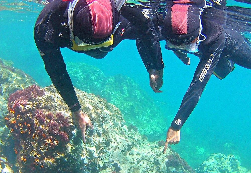 snorkeling-nerja-costa-del-sol