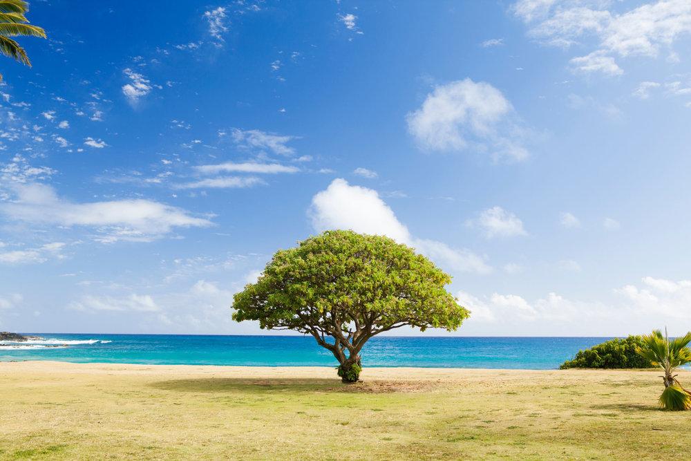 poipu-beach-kauai-hawaii-by-todd-quackenbush
