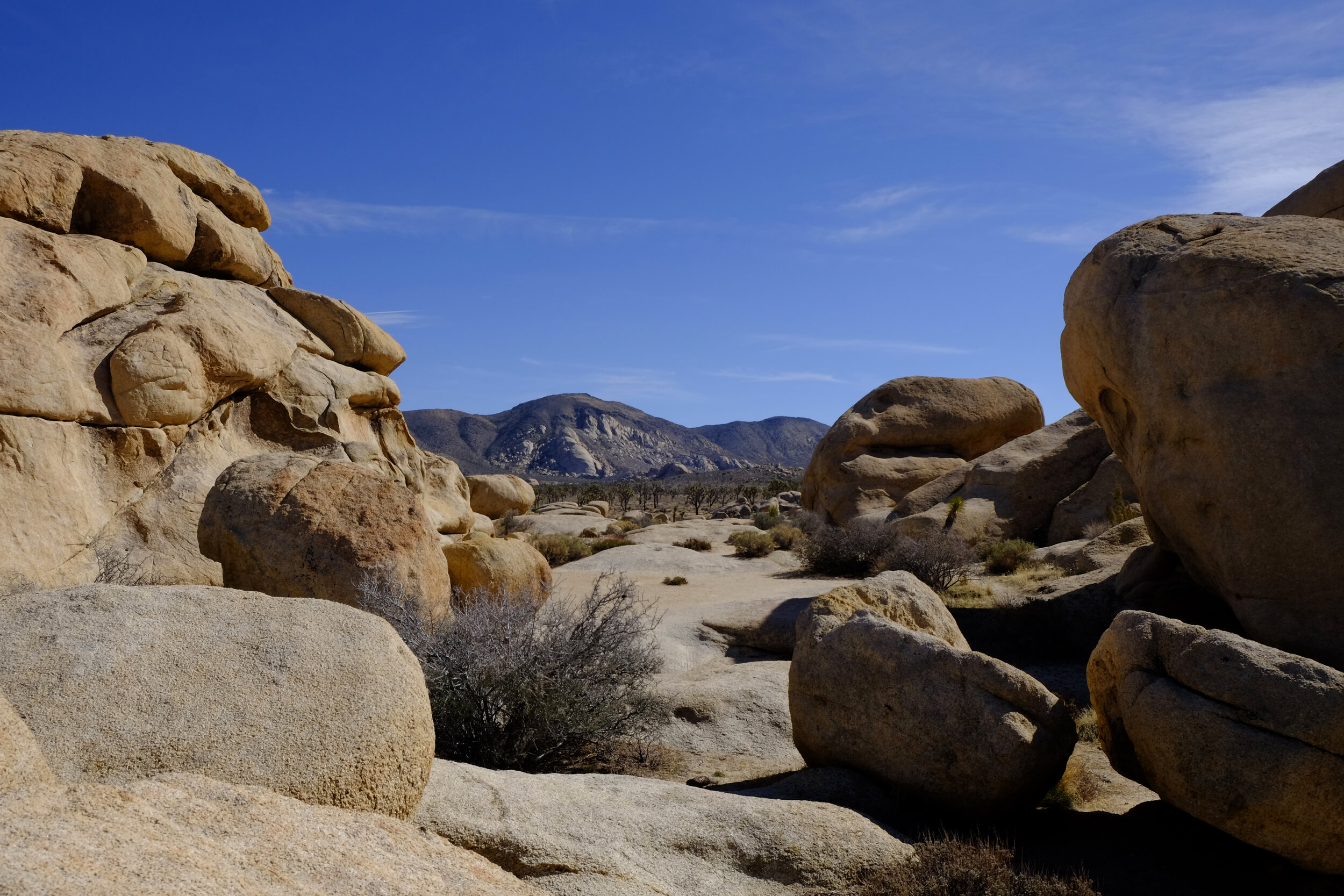 joshua tree single parents If you opt to skip straight to joshua tree and want to go  which is allegedly not only the biggest single boulder in the world but also the initial point of.