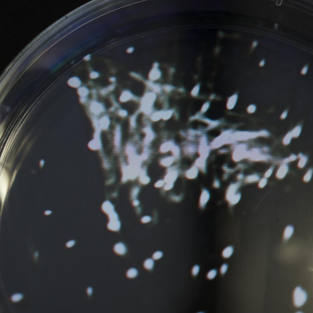 petri dish.png