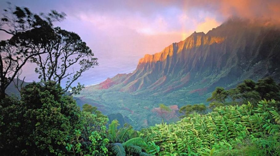 Kauai, Hawaii (Credit: Trip Advisor)                                                                 To see more photos like these go  here .