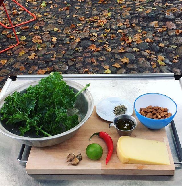 Idag har vi med lokal-høstede frugt & grønt lavet grønkålspesto, æblechutney og syltede tomater — glæd dig til videoopskrifterne💯 #lokal #smagalagellerup #grønkål #pesto #gellerup #toveshøj