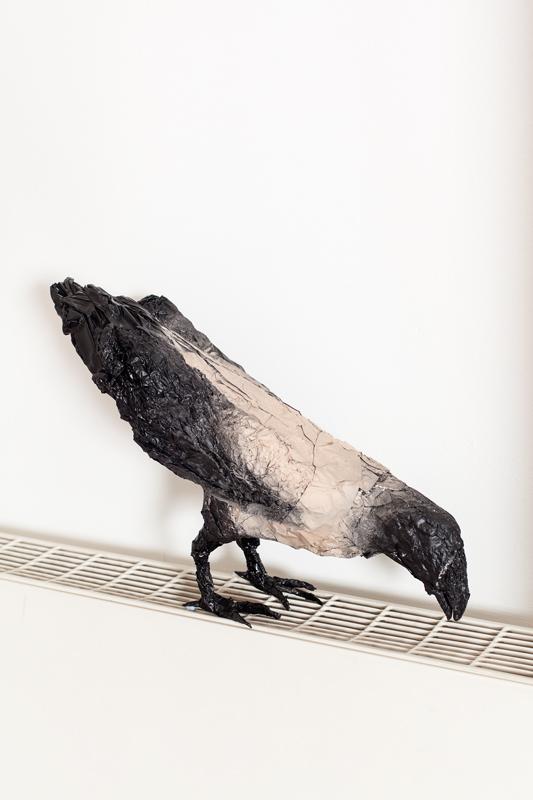 Birds. Crow 1.jpg
