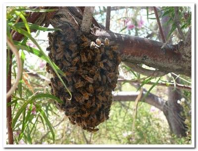 tree swarm.jpg