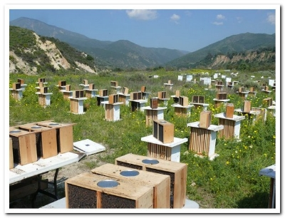 Beekeepers hives