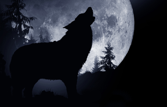 who's afraid of the big, bad wolf -