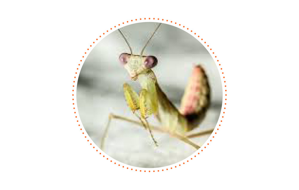Anything you are deathly afraid of? - Praying Mantises