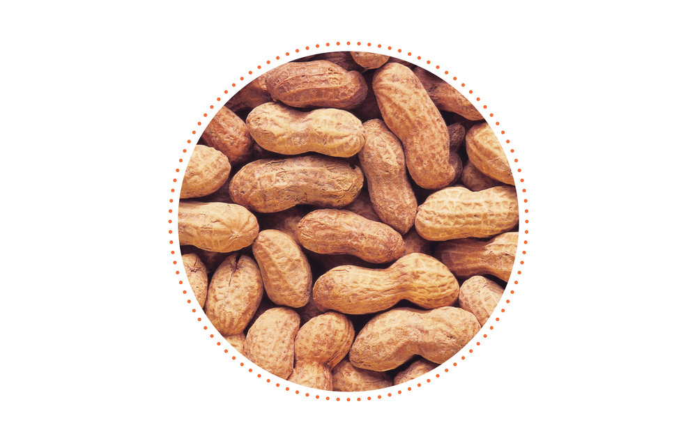 Little known fact? - I started my career as an associate editor at a peanut magazine. That's right—I wrote about peanut farming almost every day for a few years. I didn't know much about peanut farming when I started, but it was a great job!