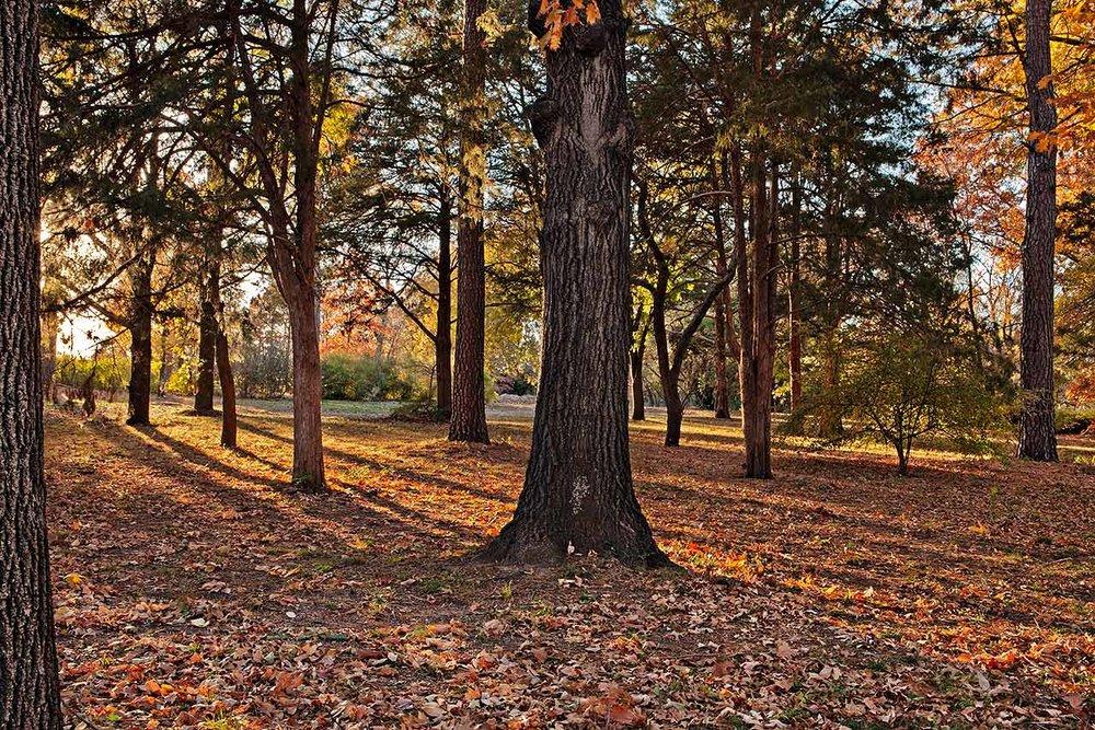 AutumnEveningShadows-X2.jpg