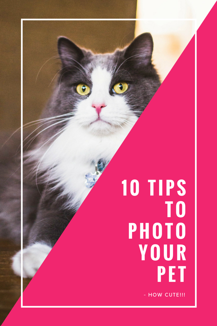 10 Tips for taking awesome photos of your pet!