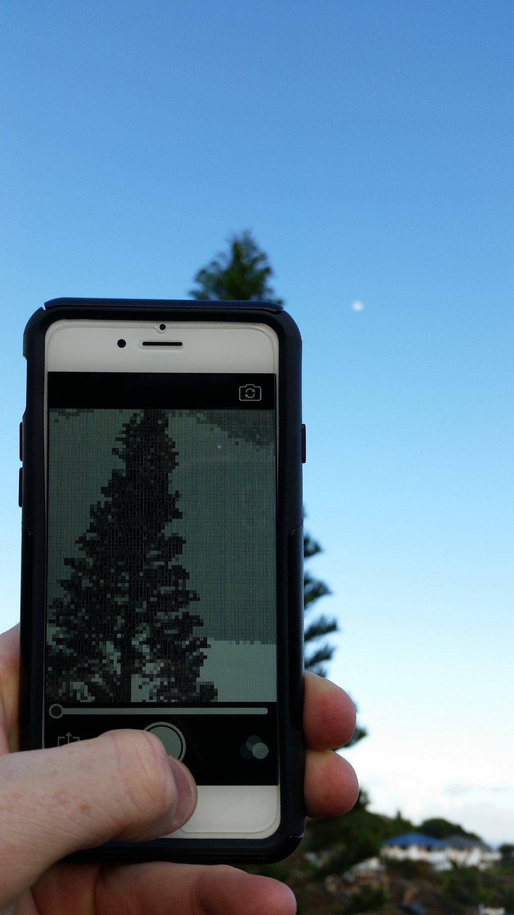 24_5ppi_treeapp.jpg