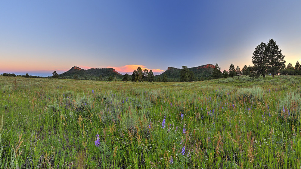 The Bears Ears Buttes framed with summer wild flowers. Photographer: Tim Peterson