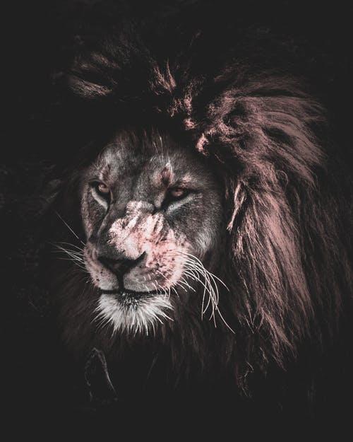 men are lions.jpeg