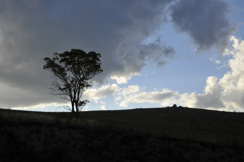 """Lone Tree"", NSW Australia"