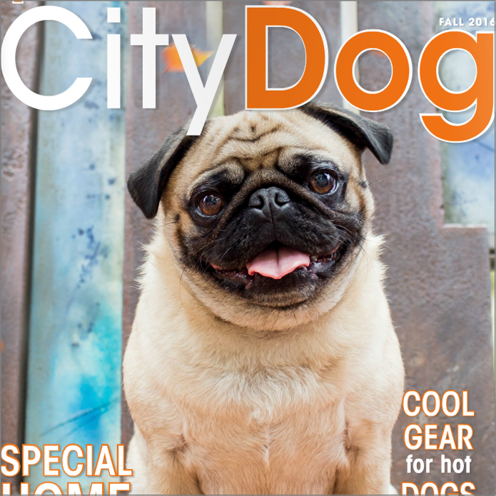 City Dog Magazine COOL THINGS FOR PETS
