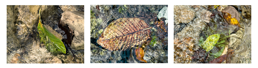 "River Leaves I, Peru   3 images, 15"" x 20"", 2015"
